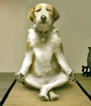 Watch A Dog S Purpose Mega